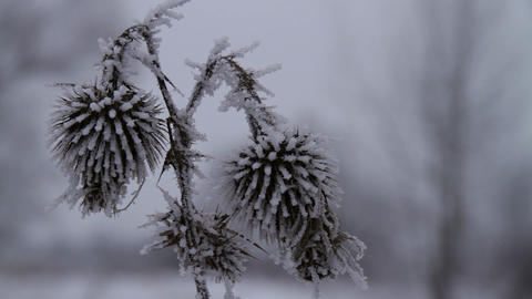 frost Stock Video Footage