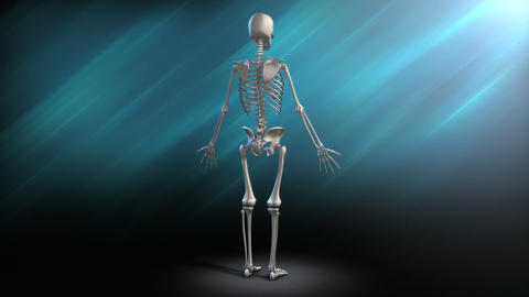 Human Skeleton Rotation Stock Video Footage