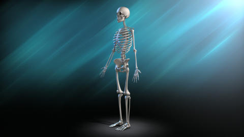 Human Skeleton Rotation stock footage