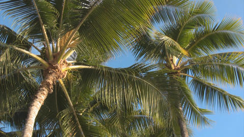 Palm trees and sky03 Stock Video Footage