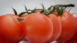 Cherry Tomatoes Rotating Loop stock footage