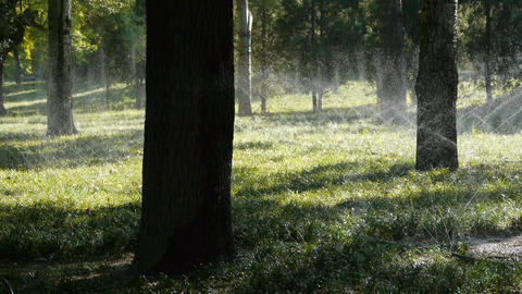 Grass water spray in trunk woods forest,sunshine on lawn backdrop background Footage