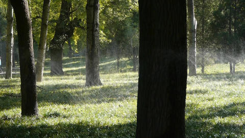 Grass water spray in trunk woods forest,sunshine on lawn... Stock Video Footage