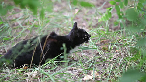 Black cat jumping in the grass, slow motion Stock Video Footage