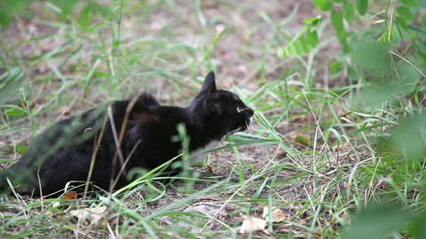 Black cat jumping in the grass, slow motion Footage