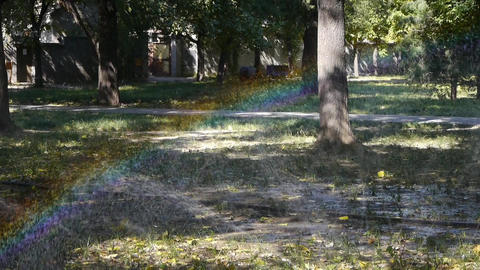 Grass water spray in trunk woods,sunshine rainbow on lawn... Stock Video Footage