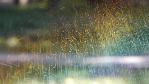 Grass water spray in woods,sunshine rainbow on lawn... Stock Video Footage