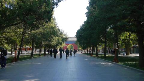 People walk in cypress trees park,China Beijing red door ancient buildings Footage