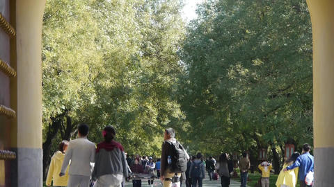 People walk in cypress trees park road,China Beijing red... Stock Video Footage