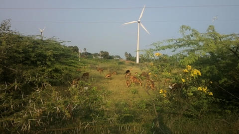 Colorful filming modern rustic idyll (pastoral) in India Wind farm Live Action