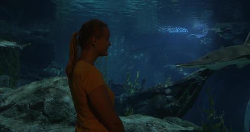 Learning sea life in oceanarium Stock Video Footage