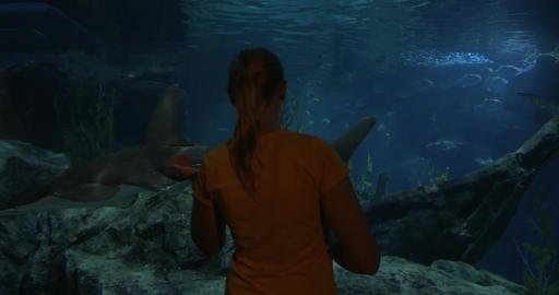 Learning sea life in oceanarium Live Action