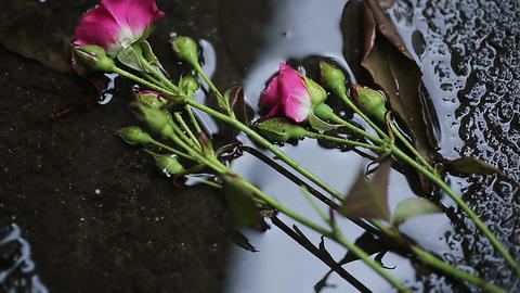 Roses falling in water on ground, victims of domestic violence, male chauvinism Footage
