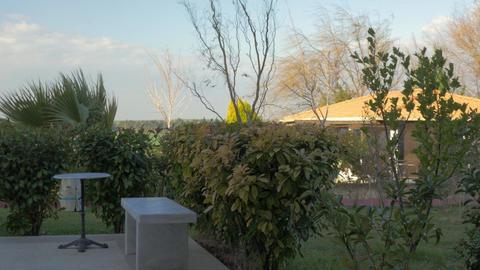 In Nea Kallikratia, Greece seen green courtyard with trees, swaying in the wind  Footage