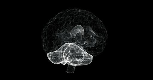Hologram of cerebrum, cerebellum and medulla oblongata of human body - loop Animation