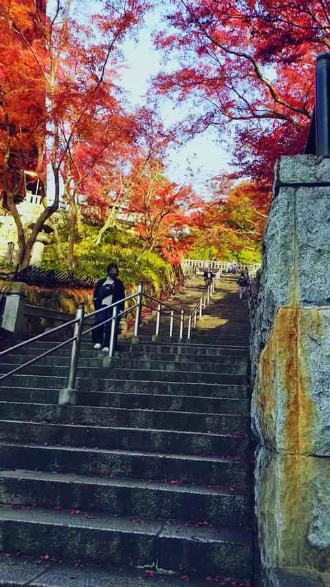 Japan,Kyoto,Tourism,Autumn leaves Live Action