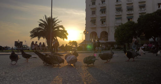 In sunny day in town square pigeons pecking grain, people walking around Footage