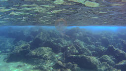 Jellyfish underwater close to the surface of the sea Footage