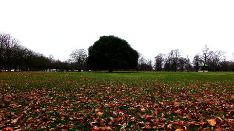 Winter. Lonely green tree in the park Footage