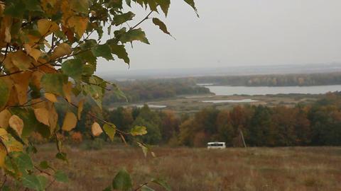 yellow birch on autumn hill Footage