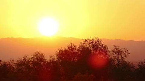 Sunny Background 4K Footage
