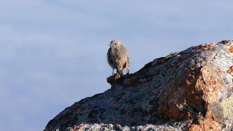 Mountain Sparrow Sunrise 4K Footage