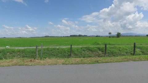Paddy Rice Fields of Kedah state, Malaysia, in the month of November Footage