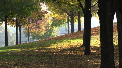 Autumn Falling Leaves in Park sunny day Footage