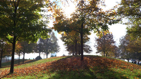 Autumn in park. Yellow leaves on ground under tree. Camera moves upwards Footage