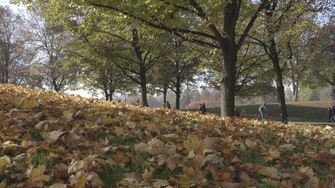 Autumn leaves on ground Footage