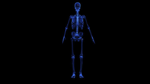 Anatomy of the human body: skeleton Animation