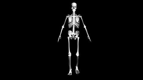 Anatomy of the human body: skeleton Stock Video Footage