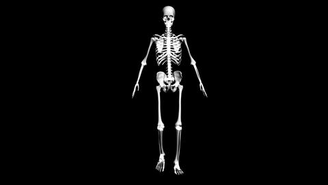 Anatomy of the human body: skeleton Stock Video Footage