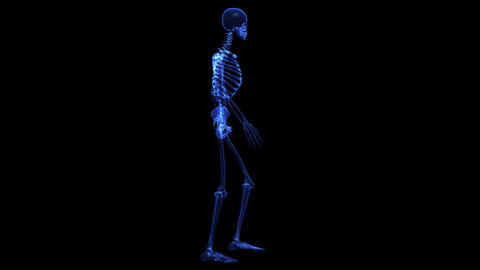 natomy: skeleton Stock Video Footage