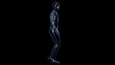 Anatomy: skin and skeleton Stock Video Footage