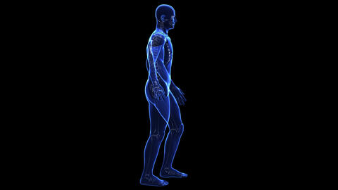 Anatomy Of The Human Body: Skin stock footage