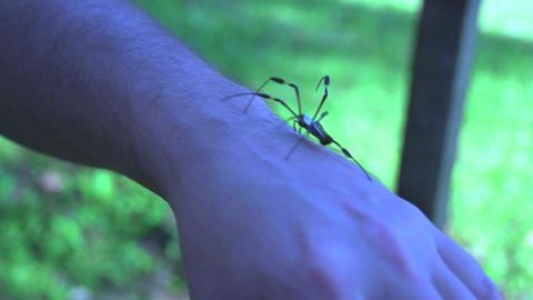 Spider 01 Footage