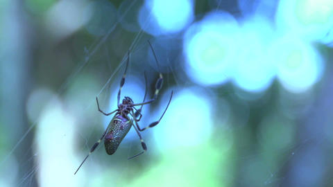Spider 03 Stock Video Footage