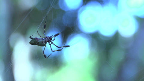 Spider 05 Stock Video Footage