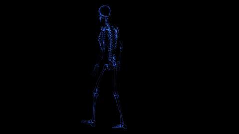 Anatomy: skeleton Stock Video Footage