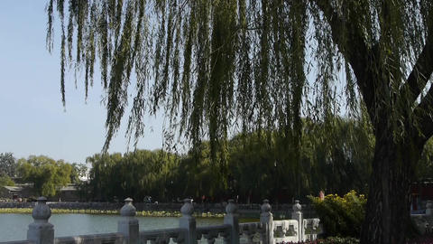willow & lotus in Beihai Park Beijing China Stock Video Footage