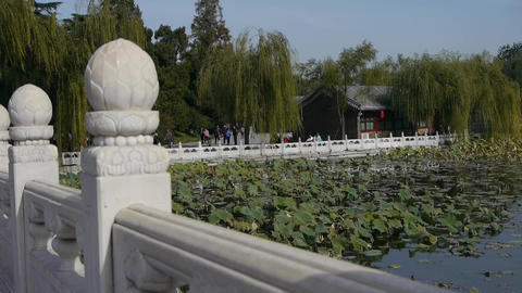 Vast lotus leaf pool in autumn beijing & white bridge Footage