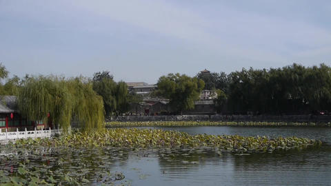Vast lotus leaf pool in autumn beijing & ancient... Stock Video Footage