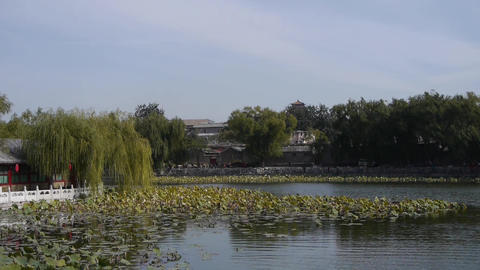 Vast lotus leaf pool in autumn beijing & ancient building Footage