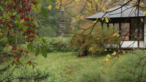 japanese garden Stock Video Footage