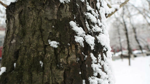 winter tree 02 Stock Video Footage