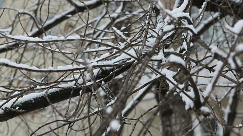 winter tree 04 Footage