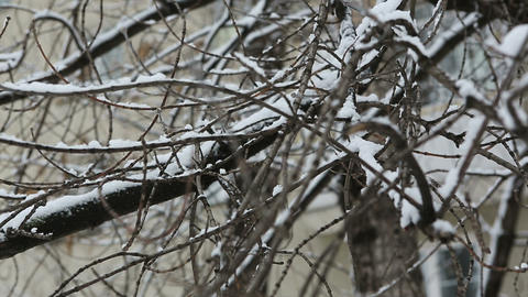 winter tree 04 Stock Video Footage