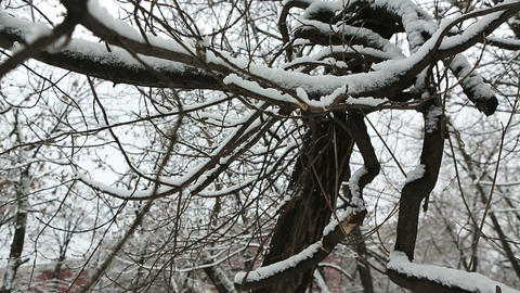 winter tree 06 Stock Video Footage