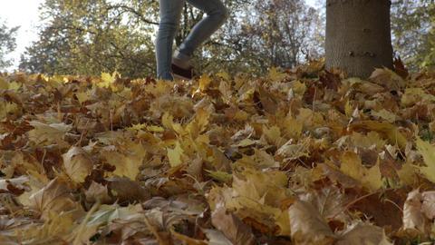 Walking on leaves under tree Footage